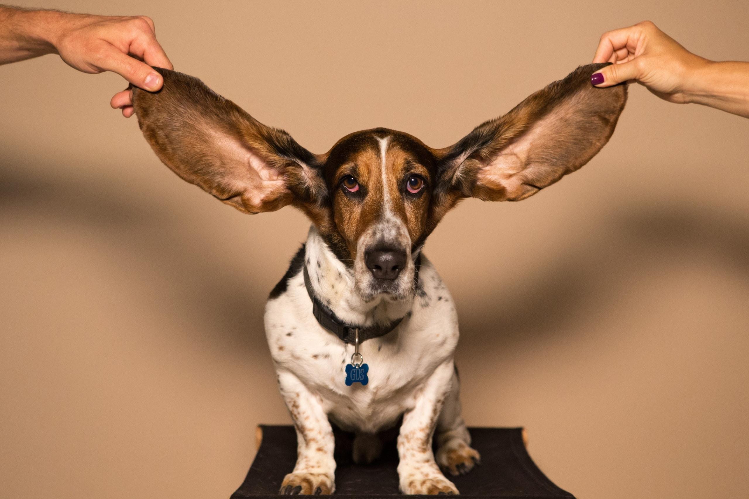 Luister training-training in luisteren